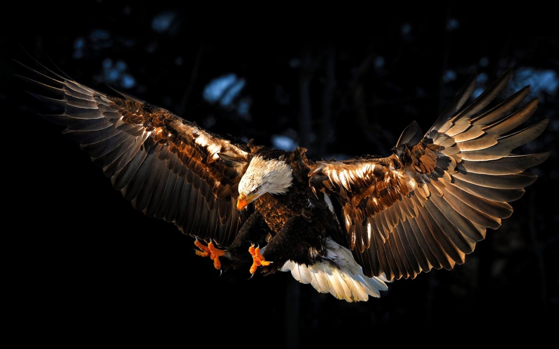 Flying eagle boc uk flying eagle altavistaventures Gallery